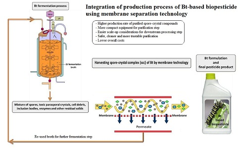 Application of Membrane Separation Technology in Downstream Processing of Bacillus thuringiensis Biopesticide: A Review